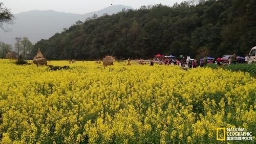 资讯生活婺源油菜花|桃源深处黄青绿,又到一年赏花季