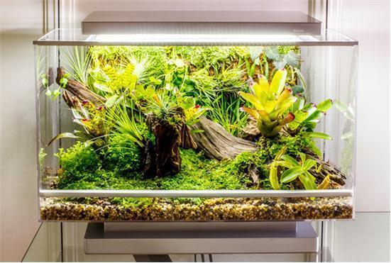 智能家庭培养箱Biopod问世动物植物都能养【热点生活】