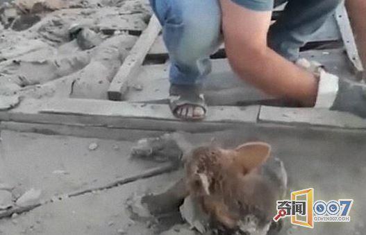 4条小狗被扔进沥青坑无法动弹