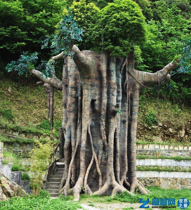 世界上最大的葡萄树一年可收5480斤